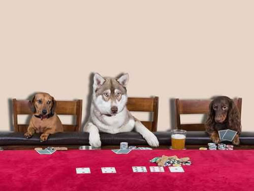 Dogs Poker Comp_75102634